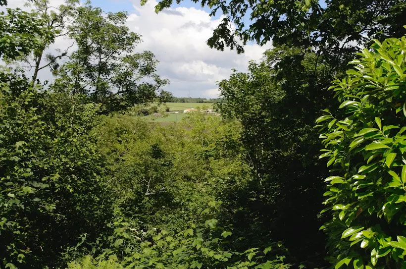 clv view from the house accross the river and woodland